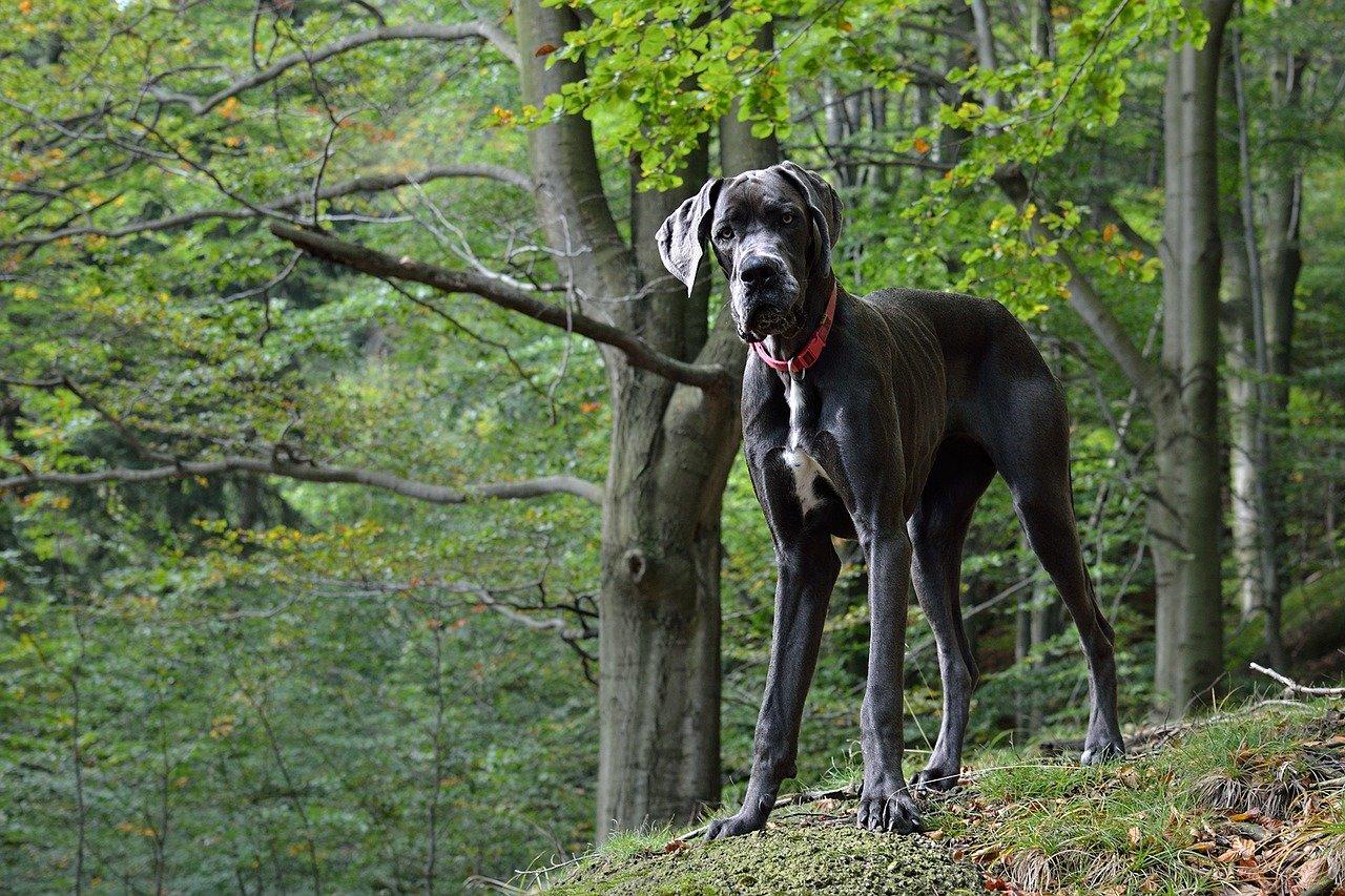 pies w białymstoku